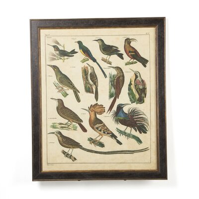 Phoenix Galleries Aviary 3 on Canvas Framed Print