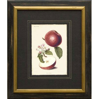 Phoenix Galleries Apples Framed Print