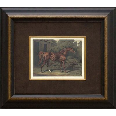 Phoenix Galleries Eclipse Horse Framed Print