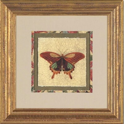 Crackled Butterfly IV Framed Print