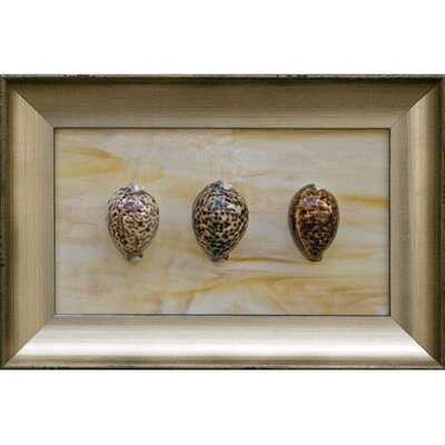 Phoenix Galleries Three Tiger Cowries Shadow Box