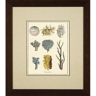 Phoenix Galleries Varieties of Coral Giclee Print