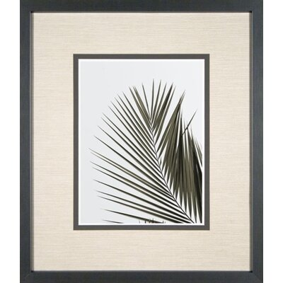 Phoenix Galleries Palm Leaf 1 Framed Print