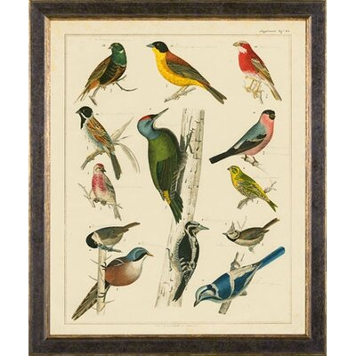 Phoenix Galleries Aviary 2 on Canvas Framed Print
