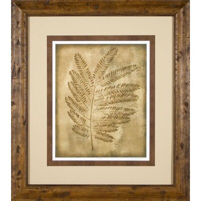 Phoenix Galleries Sepia Ferns 2 Framed Print