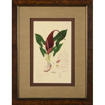 Phoenix Galleries Plate 4248 Framed Print
