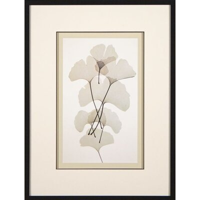 Phoenix Galleries Ginko Framed Print