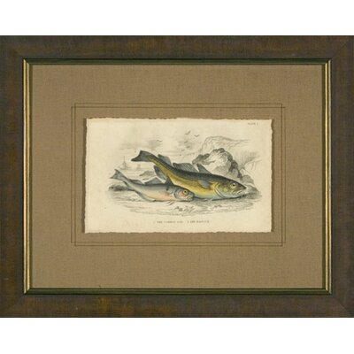 Phoenix Galleries Cod Framed Print