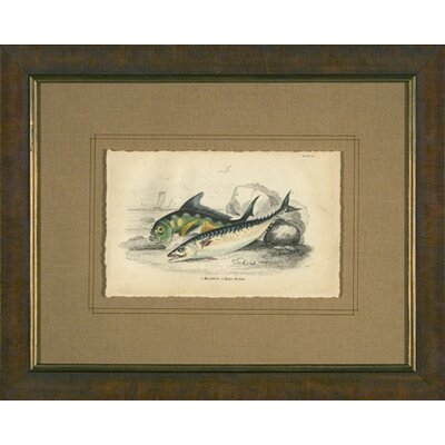 Mackerel Framed Print