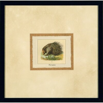 Phoenix Galleries Porcupine Framed Print