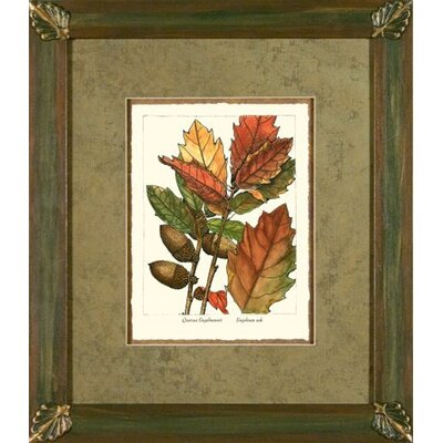 Engelman Oak Framed Print