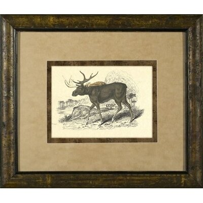Phoenix Galleries Moose Framed Print
