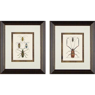 Phoenix Galleries Beetle Framed Prints
