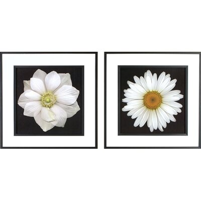 Phoenix Galleries Daisy Framed Prints