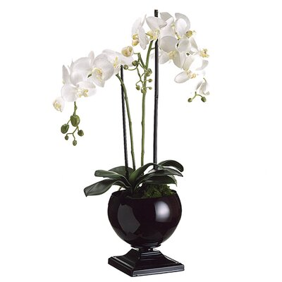 "29"" Phaleanopsis Orchid with Black Urn in White"
