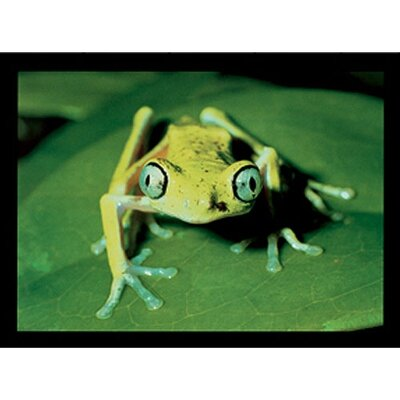 Art 4 Kids Maki Frog Canvas Art