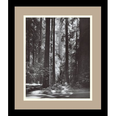 Redwoods, Founders Grove, 1966 by Ansel Adams, Framed Print Art - 13.79