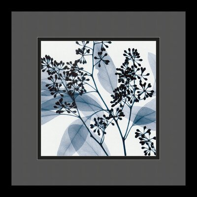 "Amanti Art Eucalyptus II by Steven N. Meyers, Framed Print Art - 13.29"" x 13.29"""