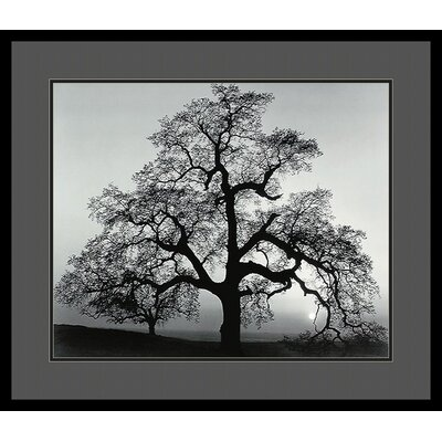 Oak Tree, Sunset City, California, 1962 by Ansel Adams, Framed Print Art - 25.04
