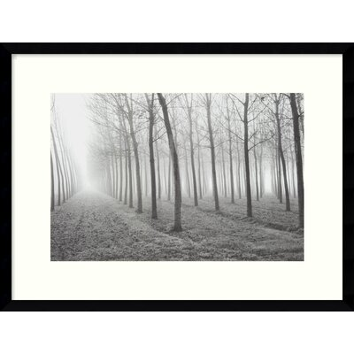 "Amanti Art Poplars, Po River Valley by Mark Citret, Framed Print Art - 19.05"" x 25.05"""