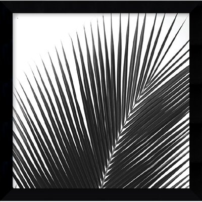 Amanti Art 'Palms 14 (Detail)' by Jamie Kingham Framed Photographic Print