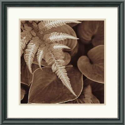 Amanti Art Painted Ferns I Framed Art Print by Rebecca Swanson