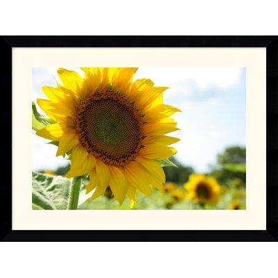 "Amanti Art Sunflowers by Andy Magee Framed Fine Art Print - 28.62"" x 38.62"""