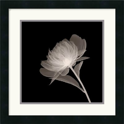 "Amanti Art Full Bloom Framed Art Print Framed Decorative Art Print - 18"" x 18"""