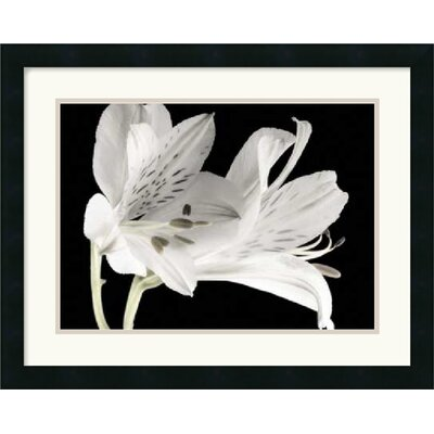Amanti Art Lily I Framed Art Print by Dianne Poinski