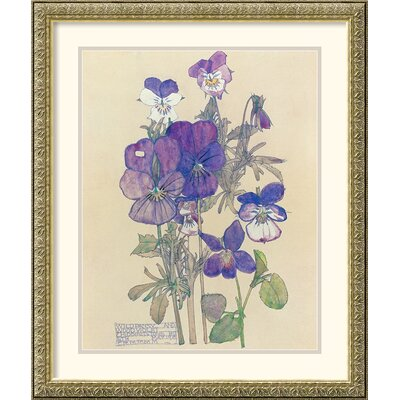 Amanti Art Wild Pansy Framed Print by Charles Rennie Mackintosh