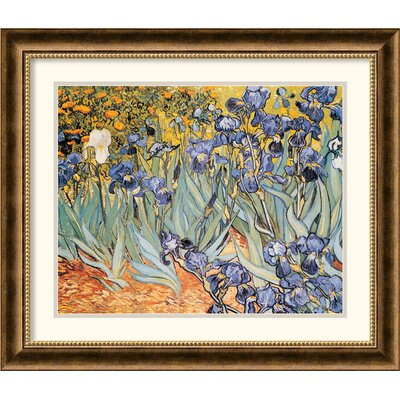 Amanti Art Irises In The Garden Framed Print by Vincent van Gogh