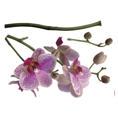 Komar Freestyle Orchids Decals