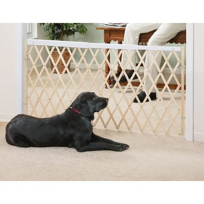"Evenflo Safety 60"" Expansion Swing Gate"