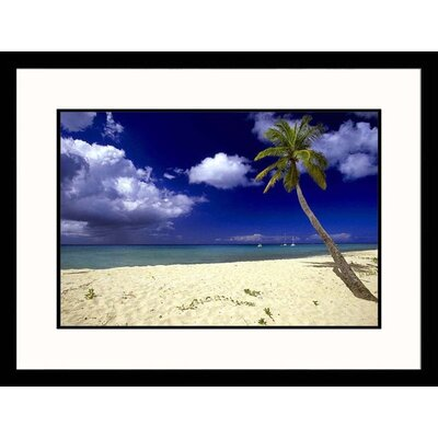 Seascapes 'St. Croix Palm Tree' by Walter Bibikow Framed Photographic Print