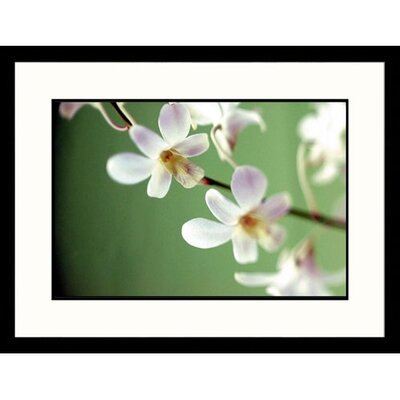 White blossoms on Green Framed Photograph