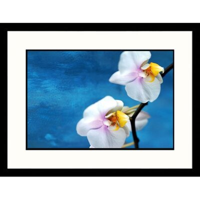 Great American Picture White Orchids on Blue Framed Photograph