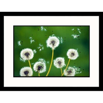 Great American Picture Dandelions Framed Photograph