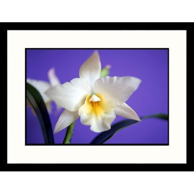 Cattleya Orchid Framed Photograph