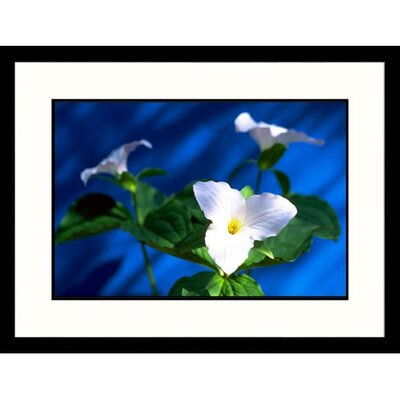Great American Picture Trillium Framed Photograph