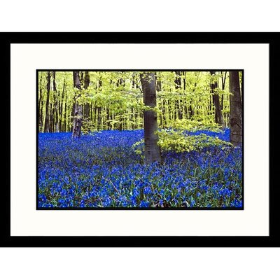 Great American Picture Trees and Flowers in Forest Framed Photograph
