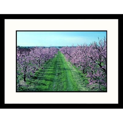 Great American Picture Ontario Orchard Framed Photograph