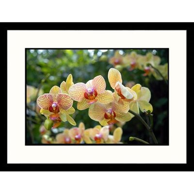 Florals Orchid Framed Photographic Print