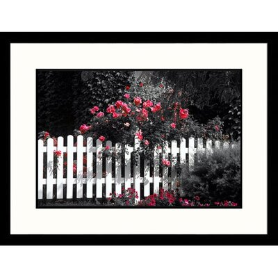 Great American Picture Rambling Rose Framed Photograph