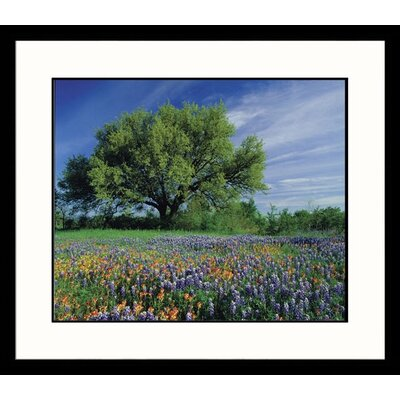 Great American Picture Landscapes 'Live Oak, Texas Flowers' by Adam Jones Framed Photographic Print