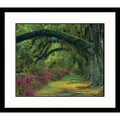 Stately Oak Charleston, South Carolina Framed Photograph - Adam Jones