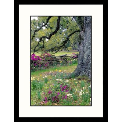 Magnolia Plantation Garden, Charleston, South Carolina Framed Photograph - Jim Schwabel