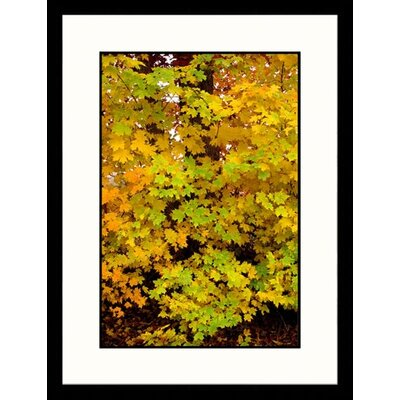 Landscapes 'Fall Leaves, Tennessee' by Jack Jr Hoehn Framed Photographic Print