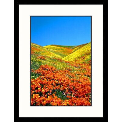 Great American Picture California Poppies Framed Photograph - Stuart  Westmorland