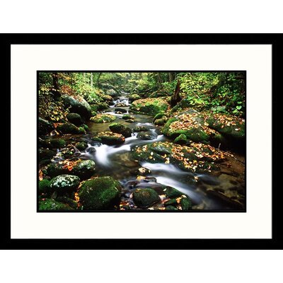 Great American Picture LeConte Creek, Great Smokey Mountains National Park, Tennessee Framed Photograph - David Davis
