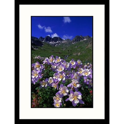Great American Picture Blue Columbine Alpine Tundra, Colorado Framed Photograph - William Ervin